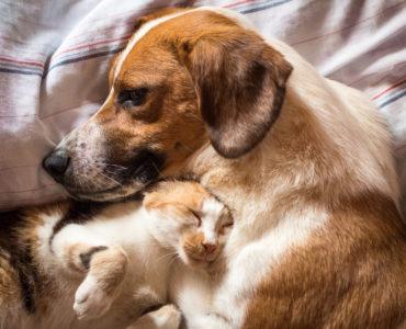5 maneras de engreir a tu mascota en invierno